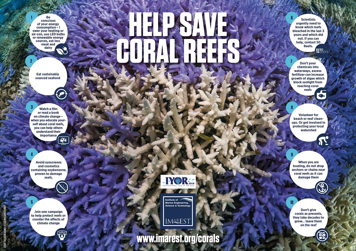 Help save coral reefs A4 purple SMALL