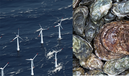 Floating wind farms as vectors for the spread of invasive species
