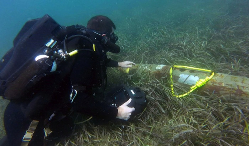 Navy divers train to tackle mines and deadly sea life in Australia