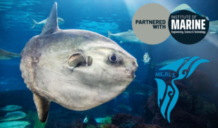 Associazione Me.Ri.S. partners with the IMarEST to advance cetacean protection