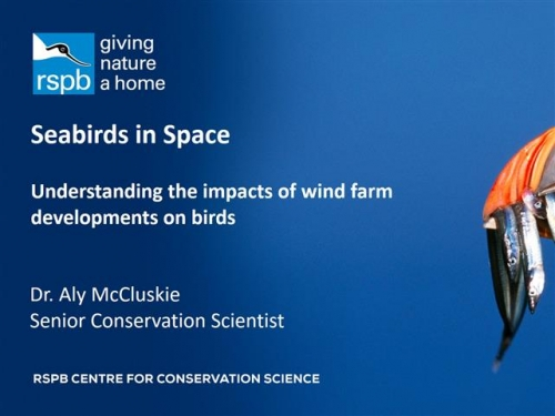 Seabirds in Space - Understanding the impacts of wind farm developments on birds