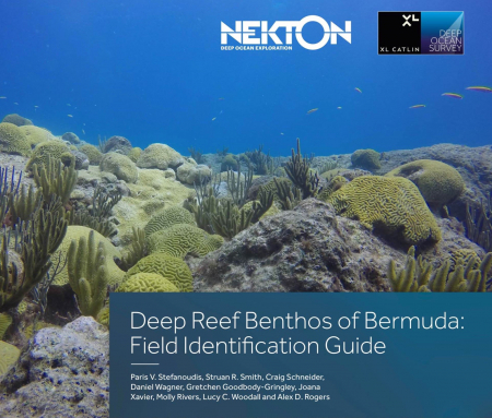 Bermuda's deep reef benthos revealed with first ID guide