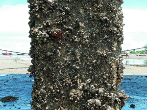 Wanted: Your knowledge on biofouling