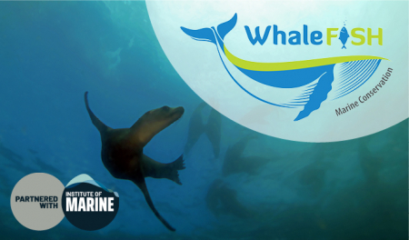 Whalefish and IMarEST partner to advance professional standards